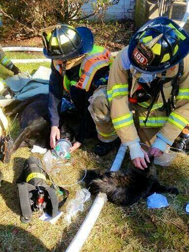 Pet Masks Used At McLean House Fire