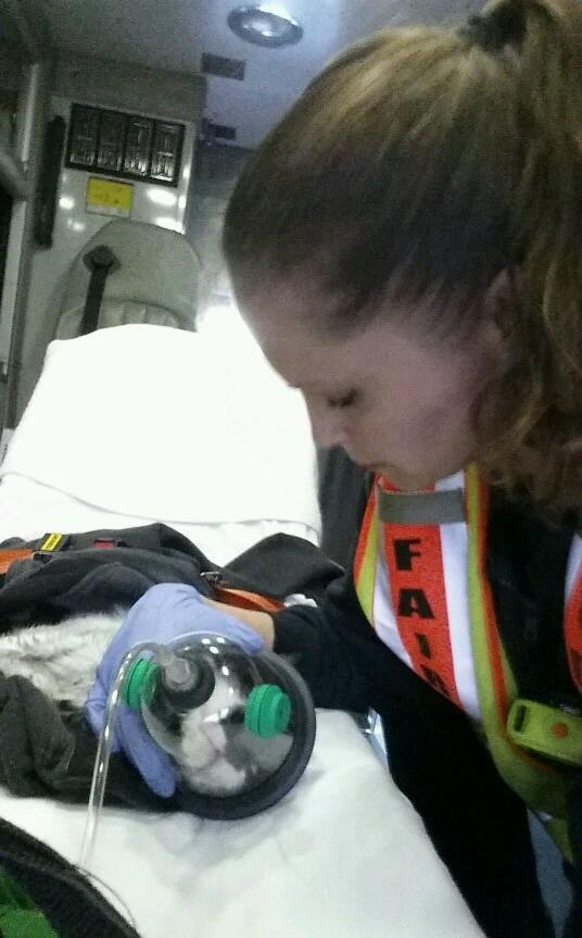Fairfax County Paramedic Jessica Pickett of Fire Station 35 (Pohick) works to save a family pet after a house fire last week. All occupants were fine, however 3 cats, a dog and bird died. This little guy was the lone survivor. Little bit of happiness in a tragic situation.