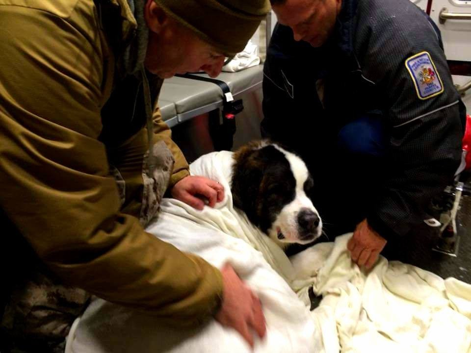 Milo the St Bernard receives medical treatment after falling through the ice in Fairfax County. Rescued by two ice rescue trained Fairfax Firefighters who got into the water to save the family dog. (Courtesy Brad Cochrane) #blizzard2016